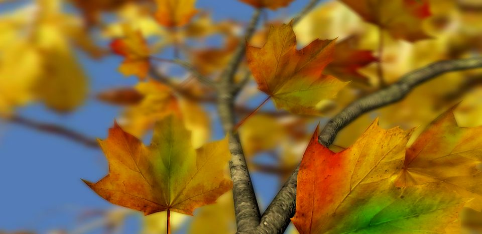Android herbst live wallpaper